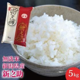 【5kg】無洗米 新潟県産 新之助 ≪令和元年度産≫