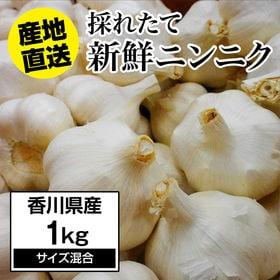 【予約】5/10~順次出荷【約1kg】にんにく 香川県産 新...