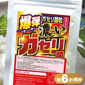 爆弾ガセリ菌粒濃いガセリ菌(約6か月分)