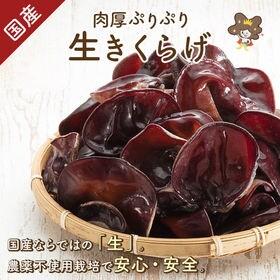 【500g】愛知県産・農薬不使用栽培★生きくらげ