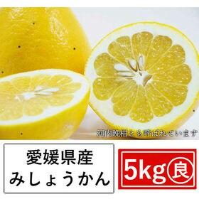 【約5kg】愛媛県産 美生柑(みしょうかん)(良品)