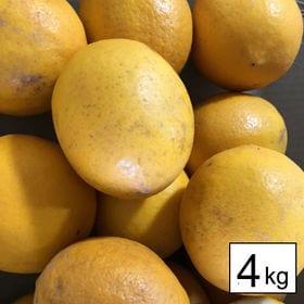 【約4kg】 国産レモン(良品・マイヤー種)
