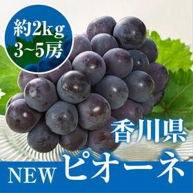 【予約受付】7/25~順次出荷【約2kg(3房-5房)】香川...