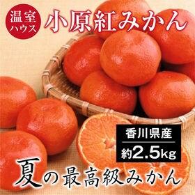 【約2.5kg(S-M)】香川県産 温室ハウス小原紅みかん(...