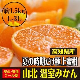 【約1.5kg(L-3L)】高知県産 極上の蜜柑 山北温室み...