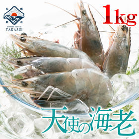 【 1kg(21尾〜40尾入)】天使の海老1kg(クルマエビ...