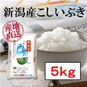 新米【5kg】新潟産こしいぶき 令和2年産