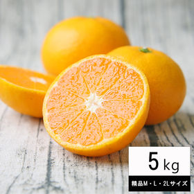 【5kg(精品M・L・2Lサイズ)】精品吉田みかん(贈答用・...