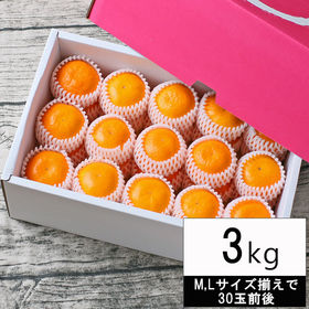 【3kg(M、Lサイズ揃えで30玉前後・ネット掛・化粧箱入)...