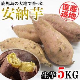 【5kgセット】 鹿児島の大自然で育った「安納芋」 産地直送...