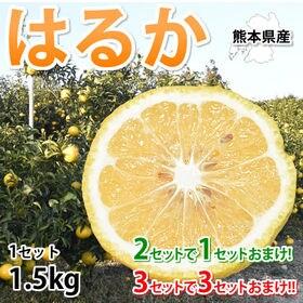 【予約受付】1/25~順次配送【約1.5kg】熊本県産 はる...