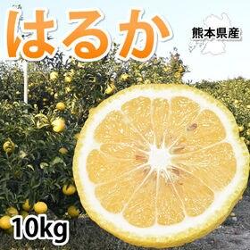 【予約受付】1/25~順次配送【約10kg】熊本県産 はるか...