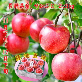 長野県産 サンふじりんご【2.3kg】