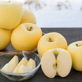 【約5kg】山形県天童産りんご金将ふじ ※ご家庭用・傷あり | 袋をかけて丁寧に育てた希少な黄色いふじりんご! 傷シミありお試し用に◎