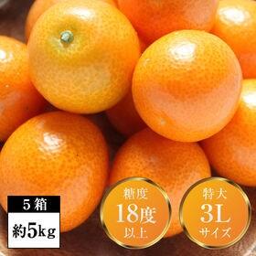 【5箱(約5kg)】完熟フルーツ金柑「大甘(だいかん)」