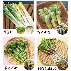 やまがた山菜セット(ひと足早い春の味覚)