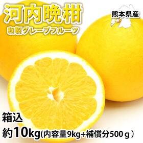 【箱込約10kg】熊本県産 河内晩柑(ご家庭用、傷あり)