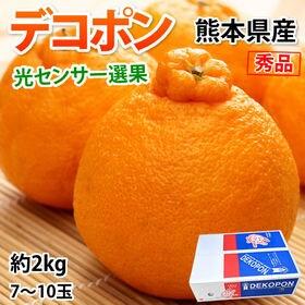 【約2kg】デコポン 光センサー選果 熊本県産 DEKOPO...