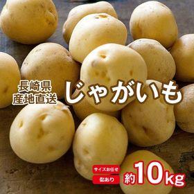 【予約受付】5/20~順次出荷【約10kg(サイズお任せ)】...