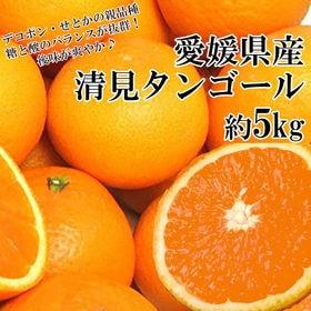 【約5kg】愛媛県産 清見タンゴール(良品)
