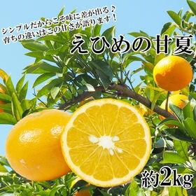 【約2kg】愛媛県産 甘夏(あまなつ)(良品)