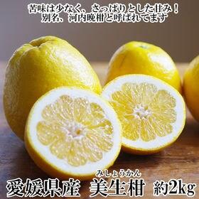 【約2kg】愛媛県産 美生柑(みしょうかん)(良品)