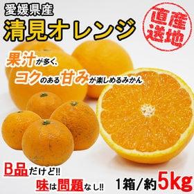 【5kgセット】 果汁が多く甘いみかん 清見オレンジ (季節...