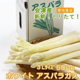 【500g/3Lサイズ】今が旬!!会津産ホワイトアスパラガス