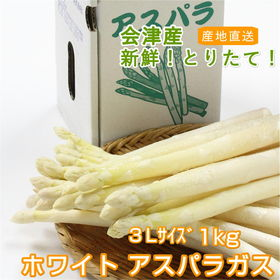 【1kg/3Lサイズ】今が旬!!会津産ホワイトアスパラガス