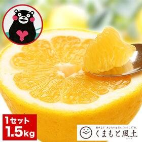 【約1.5kg】熊本県産 和製グレープフルーツ(河内晩柑)※...