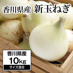 【約10kg】新たまねぎ 香川県産 旬の採れたて新玉ねぎをお...