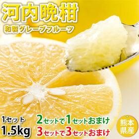 【約1.5kg】熊本県産 河内晩柑(傷あり、不揃い、ご自宅用...