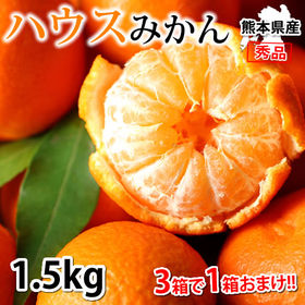 【予約受付】6/15~順次出荷【約1.5kg】熊本県産 秀品...