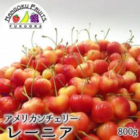 【予約受付】6/15から順次出荷【800g】アメリカンチェリ...