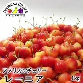 【予約受付】6/15から順次出荷【1kg】アメリカンチェリー...