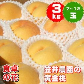 【予約受付】9/1~順次出荷【3kg/大玉(7~12玉)】山...