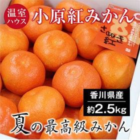 【約2.5kg(S-M)(秀品)】香川県産 温室ハウス小原紅...