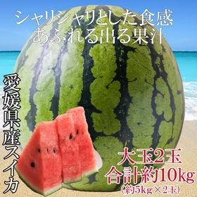 【予約受付】7/15~順次出荷【約10kg(約5kg×2玉)...