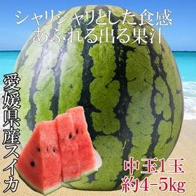 【予約受付】7/15~順次出荷【約4kg(約4kg×1玉)】...