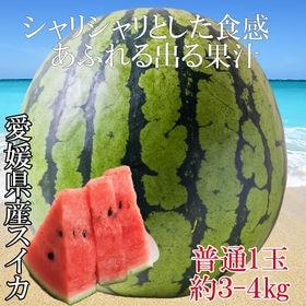 【予約受付】7/15~順次出荷【約3kg(約3kg×1玉)】...