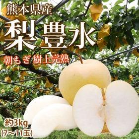【予約受付】8/26~順次出荷【約3kg 7~11玉】熊本県...