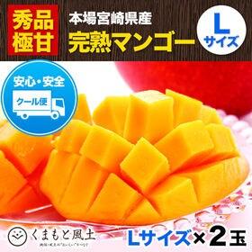 【2玉 化粧箱入り(Lサイズ)】宮崎県産 完熟マンゴー