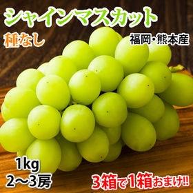 【予約受付】8/12~順次出荷【1kg 2~3房】福岡・熊本...
