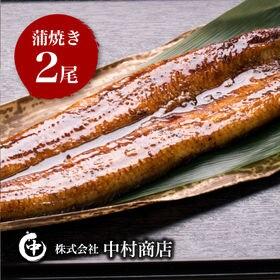 国産うなぎ蒲焼 特大サイズ2尾セット