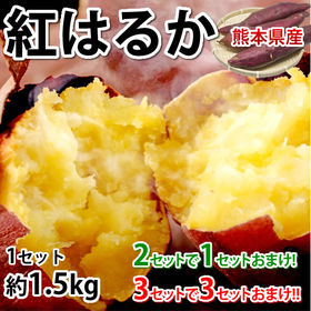 【予約受付】10/28~順次出荷【1.5kg(S~3L)】熊...