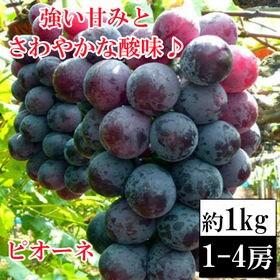 【約1kg前後(1-4房)】愛媛・山梨産 種無しピオーネ(良...