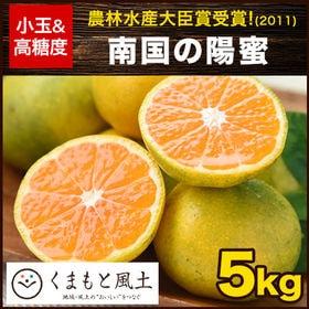 【1セット5kg】南国の陽蜜   極早生みかんなのにすごく甘い!宮崎の小玉みかん