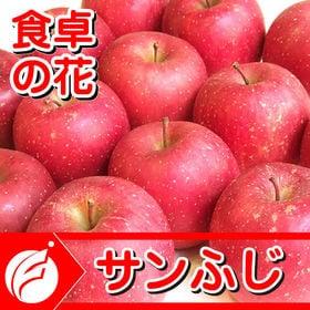 【予約受付】11/15~順次出荷【12-20玉/5kg】サン...
