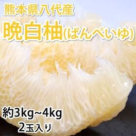 【予約受付】12/7~順次発送【2玉入り】晩白柚(ばんぺいゆ...