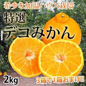 【予約受付】12/10~順次出荷【2kg(5~8玉)】熊本県...